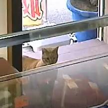 ネコ大阪寝屋川質屋まるぜん