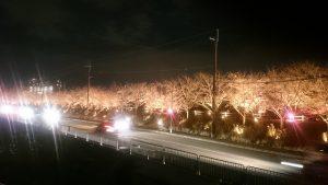 寝屋川打上桜ライトアップ大阪寝屋川質屋まるぜん
